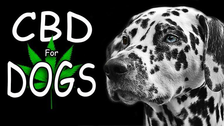 cbd oil for dogs