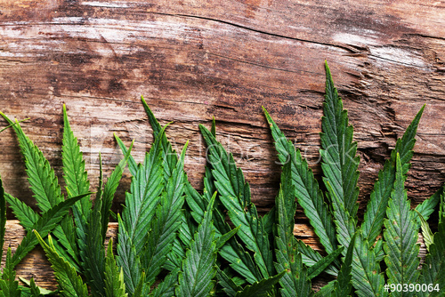Things to Consider When Buying CBD Oil