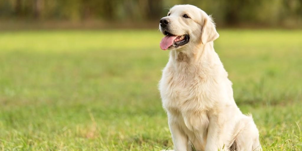 What Makes Great CBD for Pets